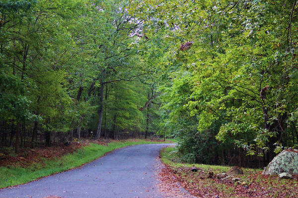Photograph - Forest Drive by Cynthia Guinn