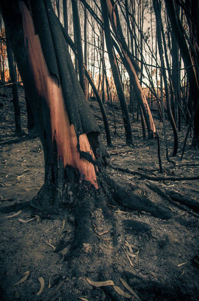 Wall Art - Photograph - Forest Fire by Carlos Caetano
