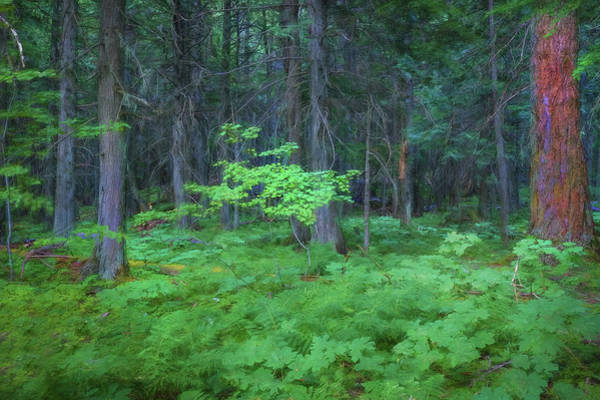 Wall Art - Photograph - Forest Floor Glacier National Park 101  by Rich Franco