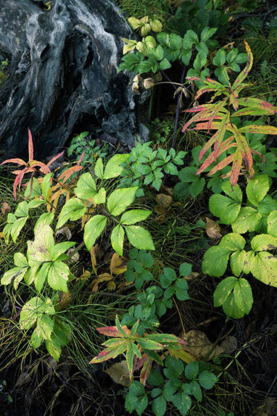 Photograph - Forest Floor In Early Autumn by Tim Newton