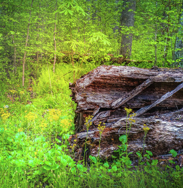 Photograph - Forest Floor In Spring by Dan Sproul