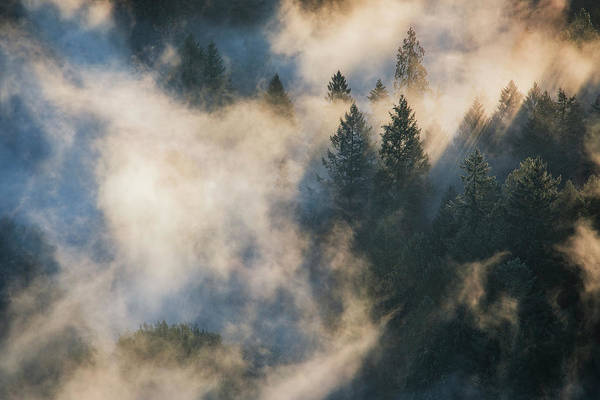 Wall Art - Photograph - Forest Fog Magic, Oregon by Vincent James
