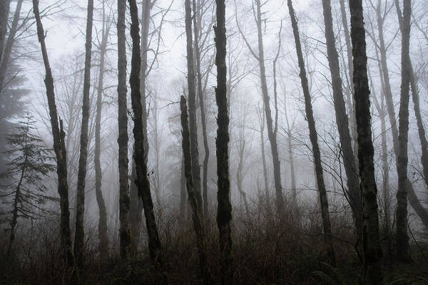 Photograph - Forest Fog by Steven Clark