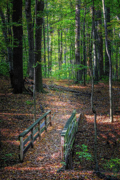 Orange Wood Photograph - Forest Footbridge by Tom Mc Nemar