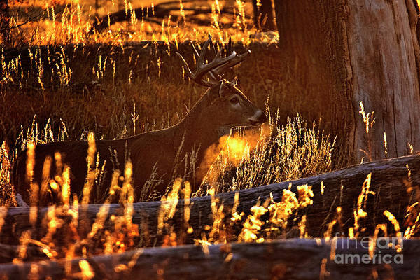 Photograph - Forest Gold by Jim Garrison