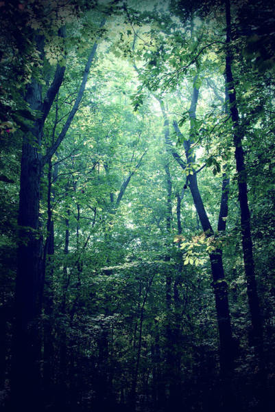Photograph - Forest Green by Michelle Wermuth