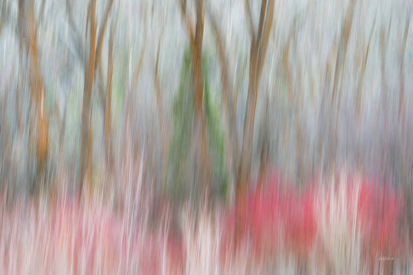 Photograph - Forest Impression 3 by Leland D Howard