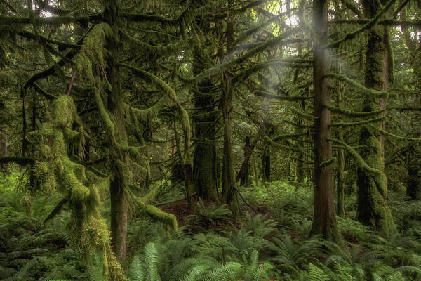 Photograph - Forest In British Columbia, Canada by Jonathan Tucker