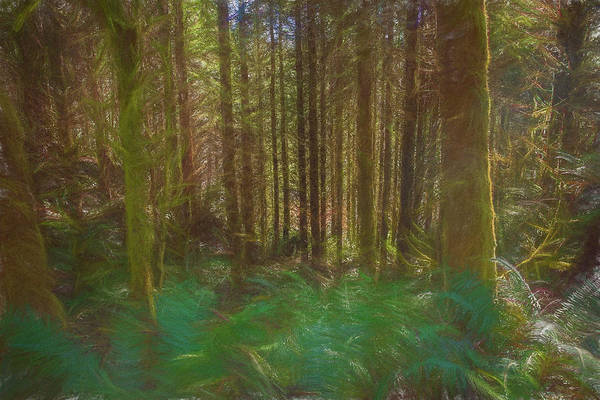 Photograph - Forest In Paint by Bill Posner