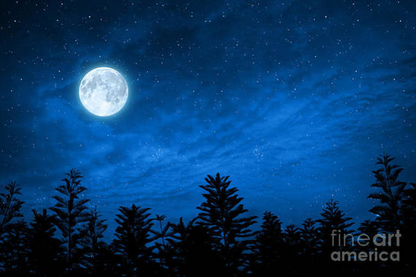 Wall Art - Photograph - Forest In Silhouette With Starry Night by Ohishiapply