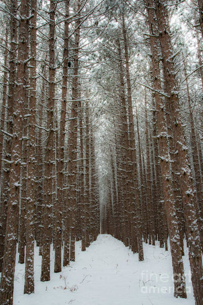 Wall Art - Photograph - Forest In Sleeping Bear Dunes In January by Twenty Two North Photography