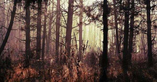 Wall Art - Photograph - Forest In Sunlight by By Julie Mcinnes