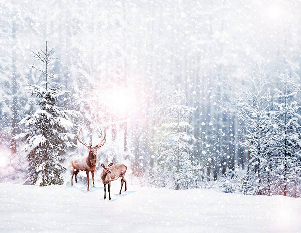 Reindeer Wall Art - Photograph - Forest In The Frost. Winter Landscape by Shutova Elena
