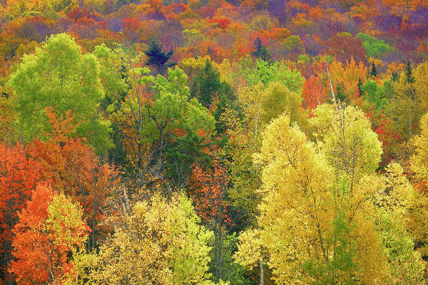 Vermont Photograph - Forest In Vermont During Autumn by Visions Of Our Land