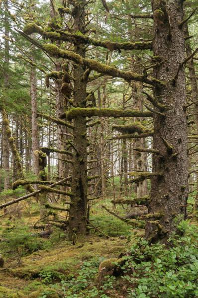 Queen Charlotte Islands Wall Art - Photograph - Forest Landscape by John Elk Iii