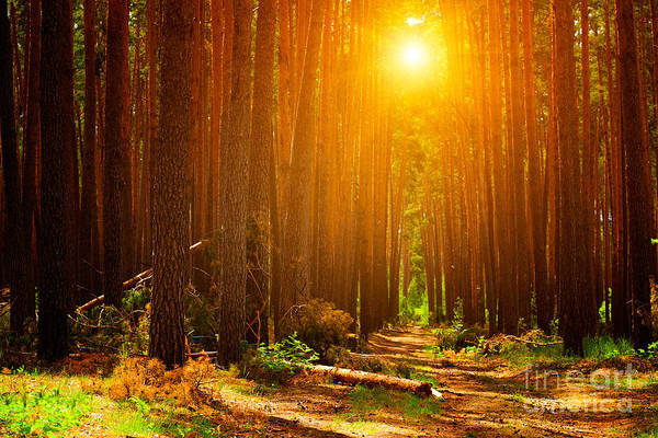 Wall Art - Photograph - Forest Landscape by Sunny Forest