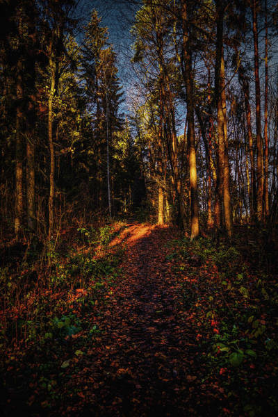 Photograph - Forest Light #i1 by Leif Sohlman