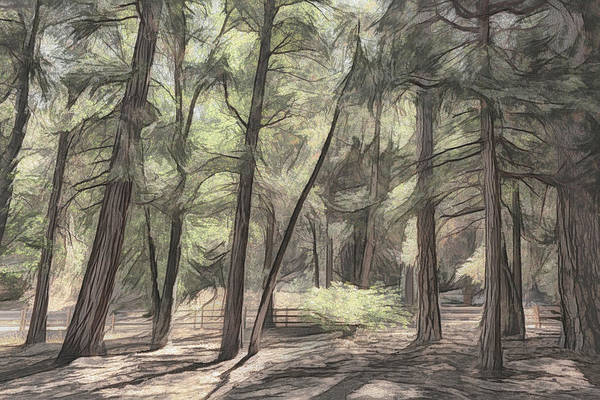 Photograph - Forest Light Sketch by Alison Frank