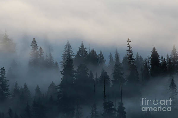 Wall Art - Photograph - Forest Morning Mist by Mike Dawson