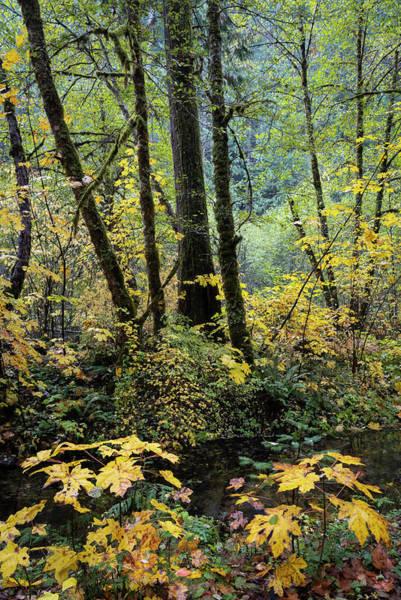 Photograph - Forest Mosaic  by Steven Clark