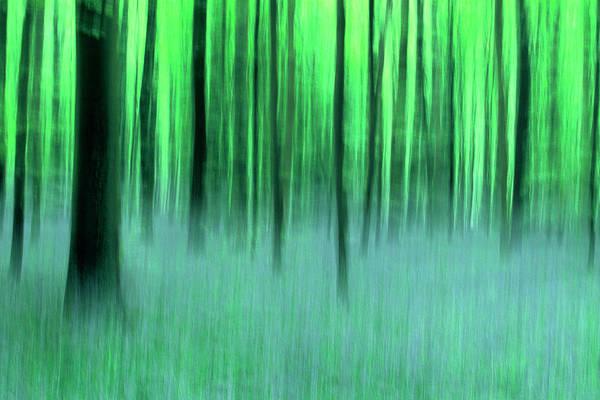 Belgium Photograph - Forest Of Halle, Belgium by Werner Van Steen