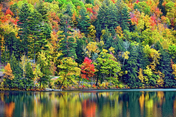 Vermont Photograph - Forest Over Lake In Vermont by Visions Of Our Land