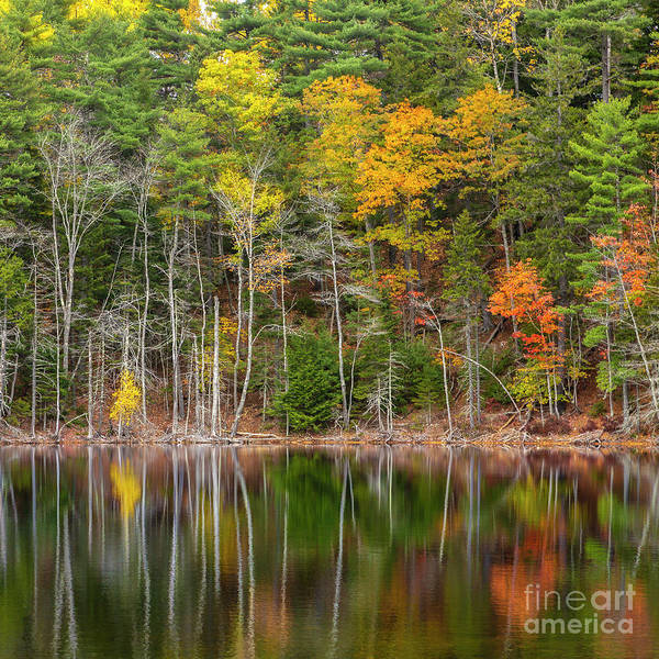 Photograph - Forest Reflecting by Karin Pinkham