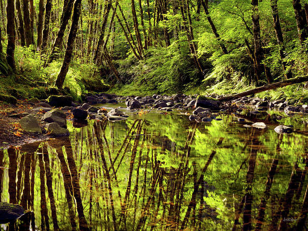 Photograph - Forest Reflections by Leland D Howard