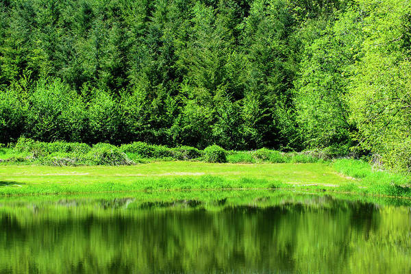 Photograph - Forest Reflections by Tikvah's Hope