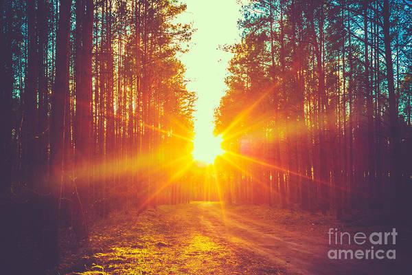 Orange Sunrise Wall Art - Photograph - Forest Road Under Sunset Sunbeams. Lane by Grisha Bruev