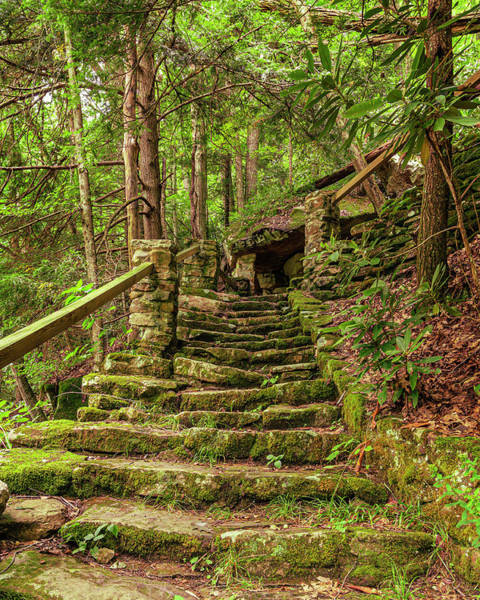 Wall Art - Photograph - Forest Stairway by SC Shank