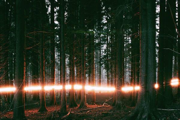 Wall Art - Photograph - Forest Streak by Ashley Jarman