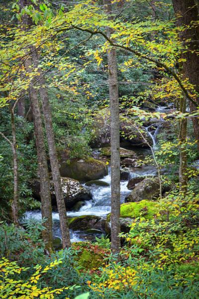 Photograph - Forest Stream Cascades by Debra and Dave Vanderlaan
