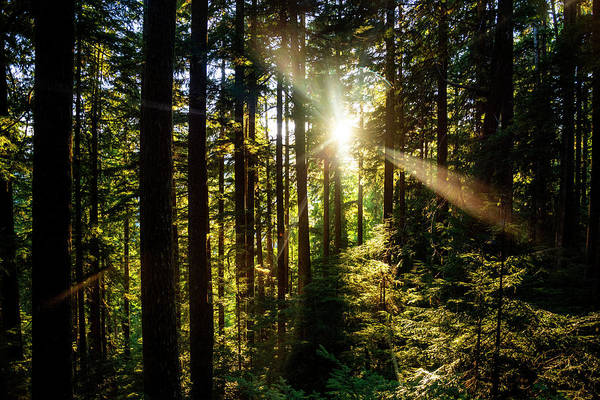 Wall Art - Photograph - Forest Sunburst by Pelo Blanco Photo