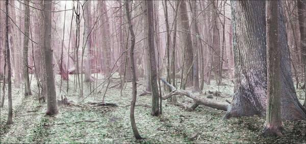 Wall Art - Photograph - Forest Tale #25 by Slawek Aniol