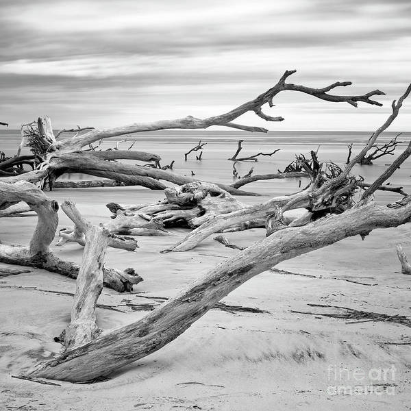 Photograph - Forest To Beach by Patrick M Lynch