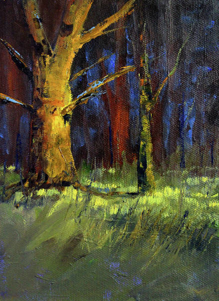 Photograph - Forest Trees 1 by Nancy Merkle