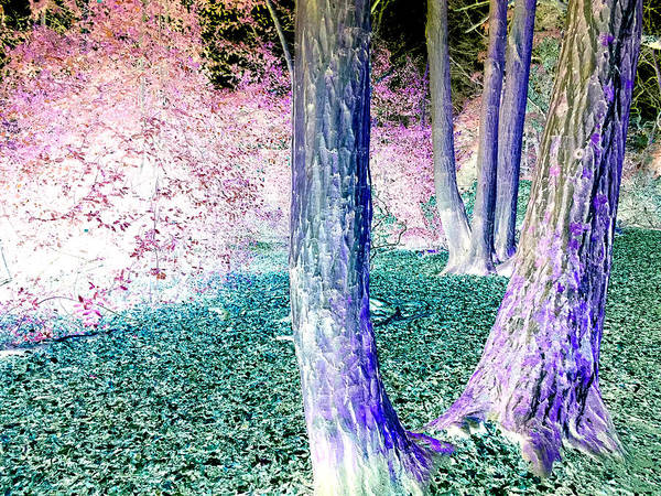 Photograph - Forest Trees In Highgate Woods 52a by Artist Dot