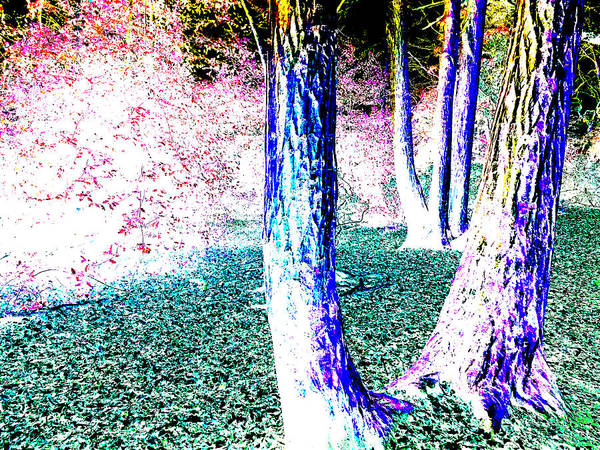 Photograph - Forest Trees In Highgate Woods 52b by Artist Dot