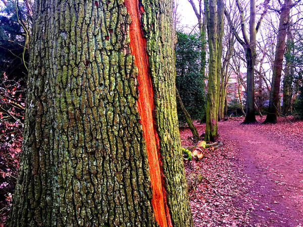 Photograph - Forest Trees In Highgate Woods 56 by Artist Dot