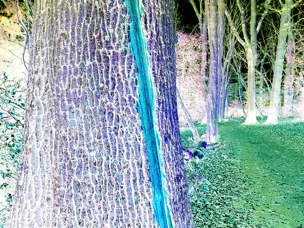 Photograph - Forest Trees In Highgate Woods 56a by Artist Dot