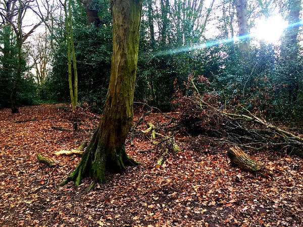 Photograph - Forest Trees In Highgate Woods 59 by Artist Dot