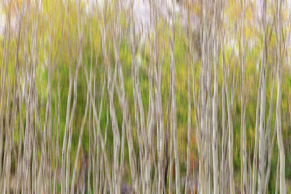 Photograph - Forest Twist And Turns In Motion by James BO Insogna
