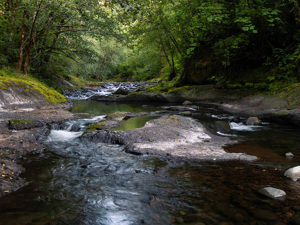 Photograph - Forest Waterways by Steven Clark