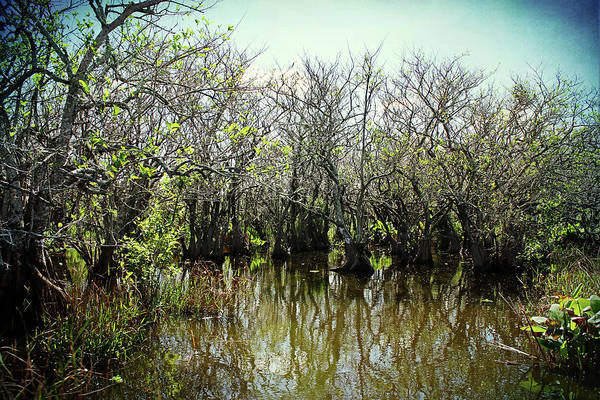 Photograph - Spooked In The Everglades by Kathi Mirto