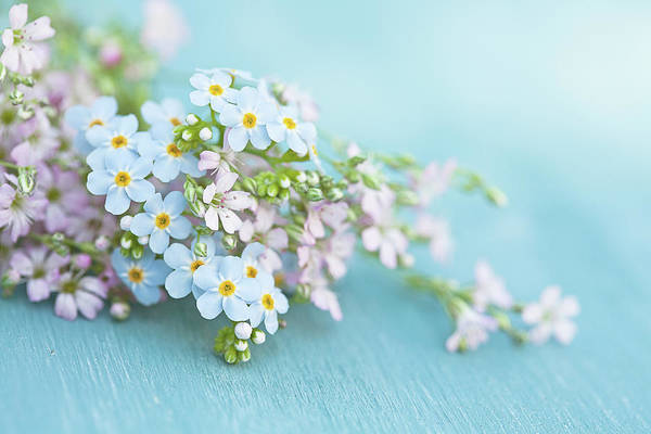 Forget Me Not Photograph - Forget Me Not And Wild Thyme Flowers by Isabelle Lafrance Photography