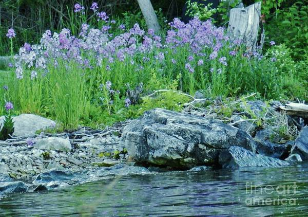 Wall Art - Photograph - Forget Me Nots Cana Island by Snapshot Studio