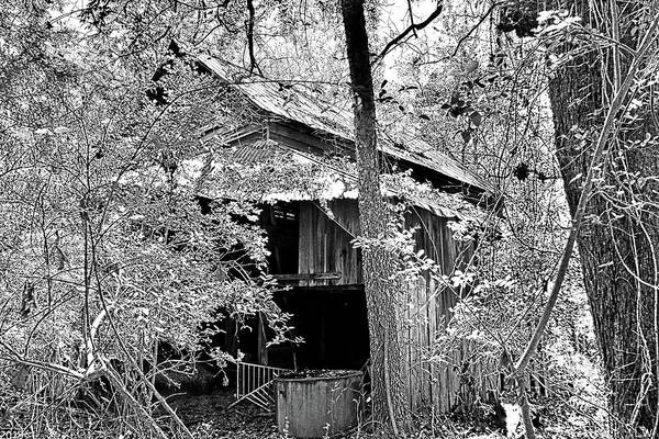 Photograph - Forgotten Barn Black And White by Lisa Wooten