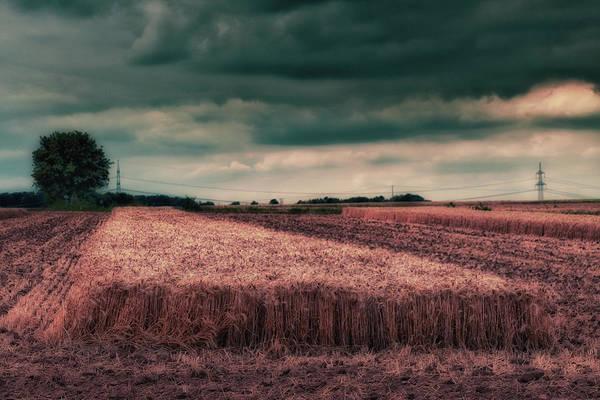 Wall Art - Photograph - Forgotten Harvest by Rabiri Us