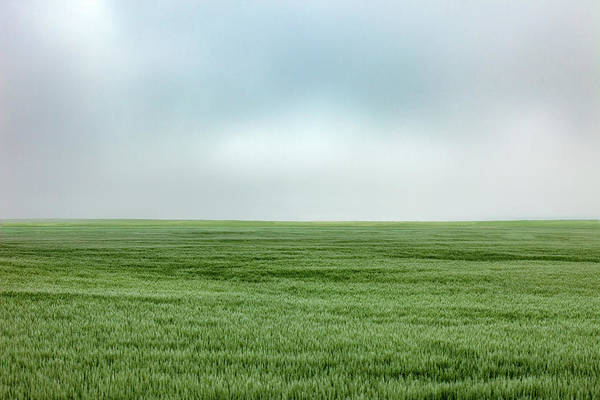 Wall Art - Photograph - Fort Benton Wheat by Todd Klassy